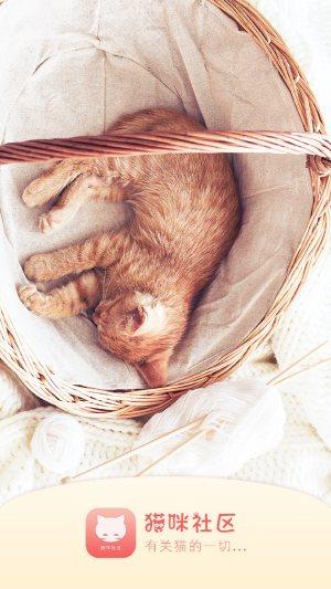 猫咪社区app图4