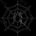 SpiderNetwork
