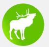 LGT動物保護鏈